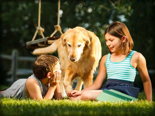 Personal lines quote request photo showing children playing outside w/their dog